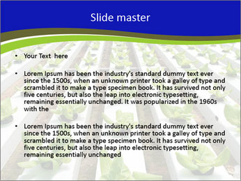 0000079724 PowerPoint Template - Slide 2