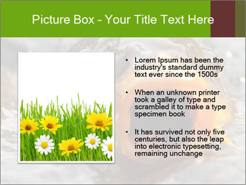 0000079734 PowerPoint Template - Slide 13