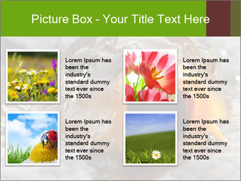 0000079734 PowerPoint Template - Slide 14