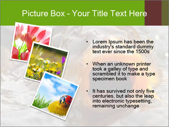0000079734 PowerPoint Template - Slide 17