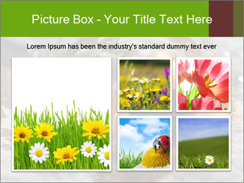 0000079734 PowerPoint Template - Slide 19