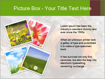 0000079734 PowerPoint Template - Slide 23