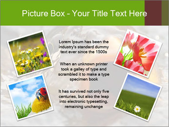 0000079734 PowerPoint Template - Slide 24