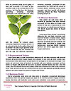 0000079782 Word Templates - Page 4