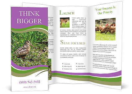 0000079784 Brochure Template