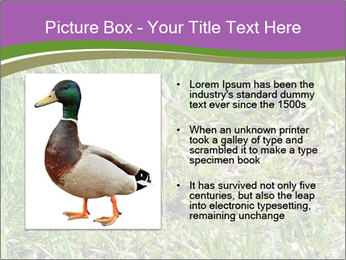 0000079784 PowerPoint Templates - Slide 13