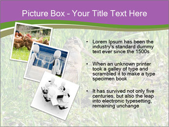 0000079784 PowerPoint Template - Slide 17