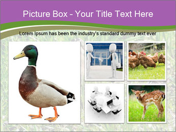 0000079784 PowerPoint Templates - Slide 19