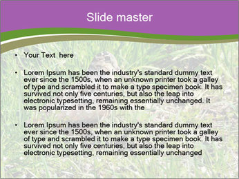 0000079784 PowerPoint Template - Slide 2