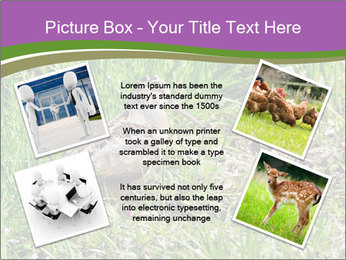 0000079784 PowerPoint Template - Slide 24