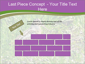 0000079784 PowerPoint Template - Slide 46