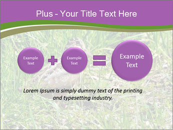 0000079784 PowerPoint Template - Slide 75
