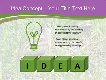 0000079784 PowerPoint Template - Slide 80