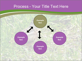 0000079784 PowerPoint Template - Slide 91