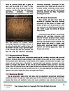 0000079797 Word Template - Page 4