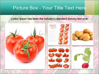 0000079811 PowerPoint Template - Slide 19