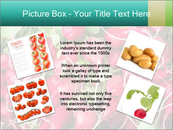 0000079811 PowerPoint Template - Slide 24