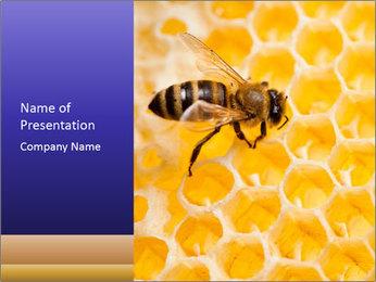 0000079822 PowerPoint Templates - Slide 1