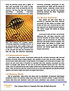 0000079822 Word Template - Page 4
