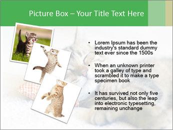 0000079878 PowerPoint Templates - Slide 17