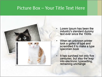 0000079878 PowerPoint Templates - Slide 20
