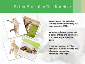 0000079878 PowerPoint Templates - Slide 23