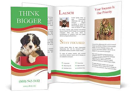 0000079904 Brochure Template