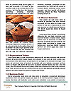 0000079928 Word Templates - Page 4