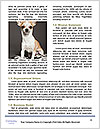 0000079932 Word Template - Page 4