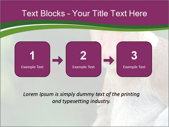 0000079951 PowerPoint Template - Slide 71
