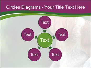 0000079951 PowerPoint Templates - Slide 78