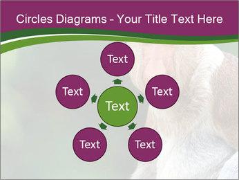 0000079951 PowerPoint Template - Slide 78