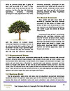 0000079964 Word Templates - Page 4