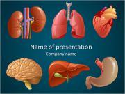 Internal organs PowerPoint Templates