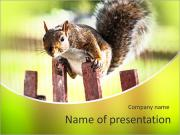 Squirrel PowerPoint Templates
