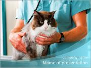 Cat and vet powerpoint template backgrounds id 0000008234 cat and vet powerpoint template toneelgroepblik Gallery