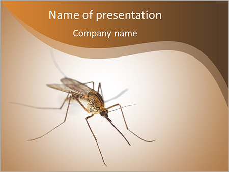 Mosquito powerpoint template backgrounds id 0000008370 mosquito powerpoint templates toneelgroepblik Gallery