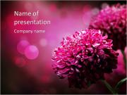 Pink flowers PowerPoint Templates