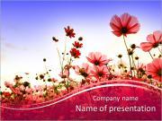 Květinová pole PowerPoint šablony