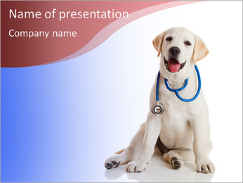 Dog posing at a reception vet PowerPoint Template