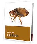 Large flea Presentation Folder
