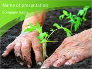 Woman puts a plant, older hands PowerPoint Templates