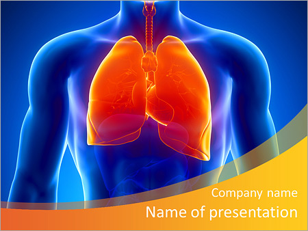 Human lungs and male anatomy PowerPoint Template
