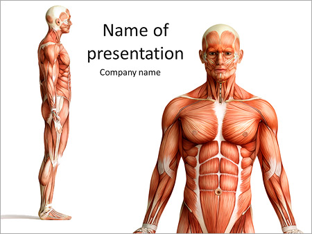 human muscles on a mannequin powerpoint template & backgrounds id, Modern powerpoint