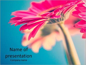 Beautiful pink flower PowerPoint Template
