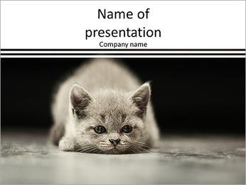 Small gray kitten lying on the floor PowerPoint Template