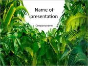 Green tropical jungle PowerPoint Templates