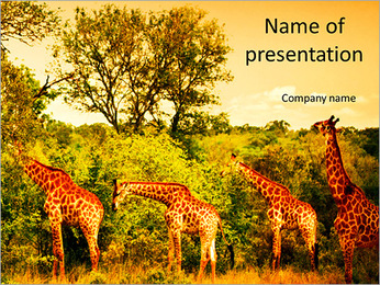 Image of a South African giraffes beautiful view PowerPoint Template