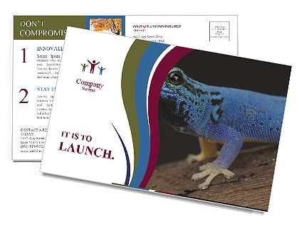 0000080007 Postcard Templates