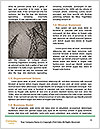 0000080019 Word Templates - Page 4